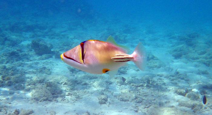 червоне море єгипет риба