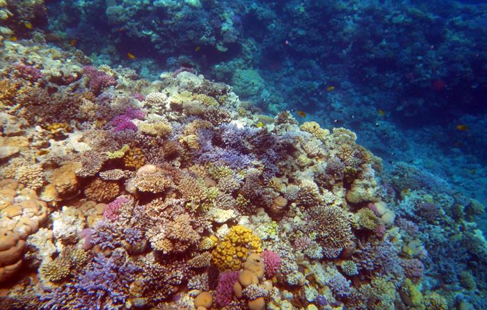 кораловий риф червоне море єгипет
