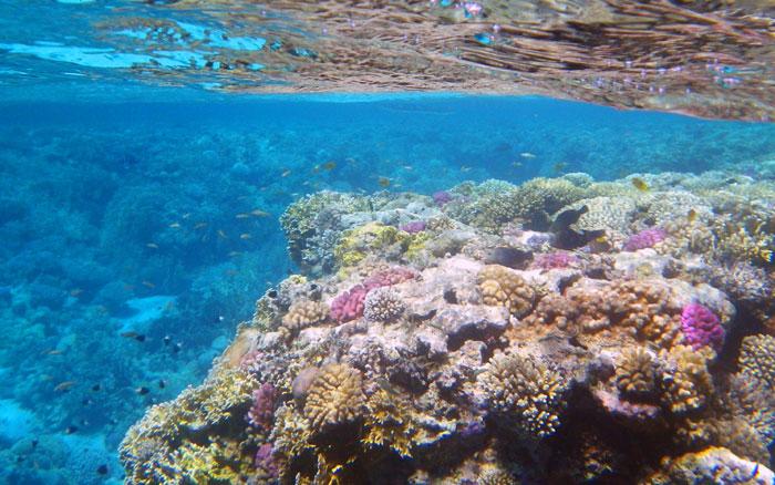 кораловий риф у червоному морі