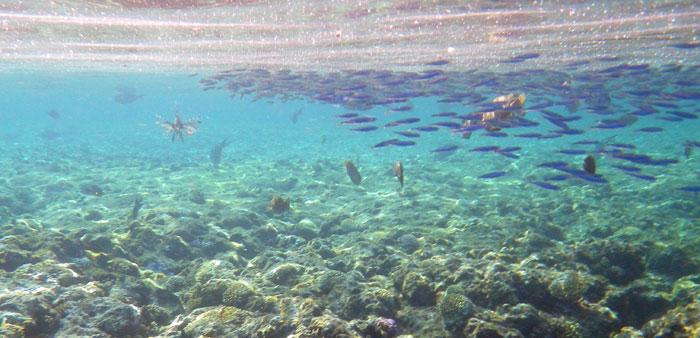 червоне море египет